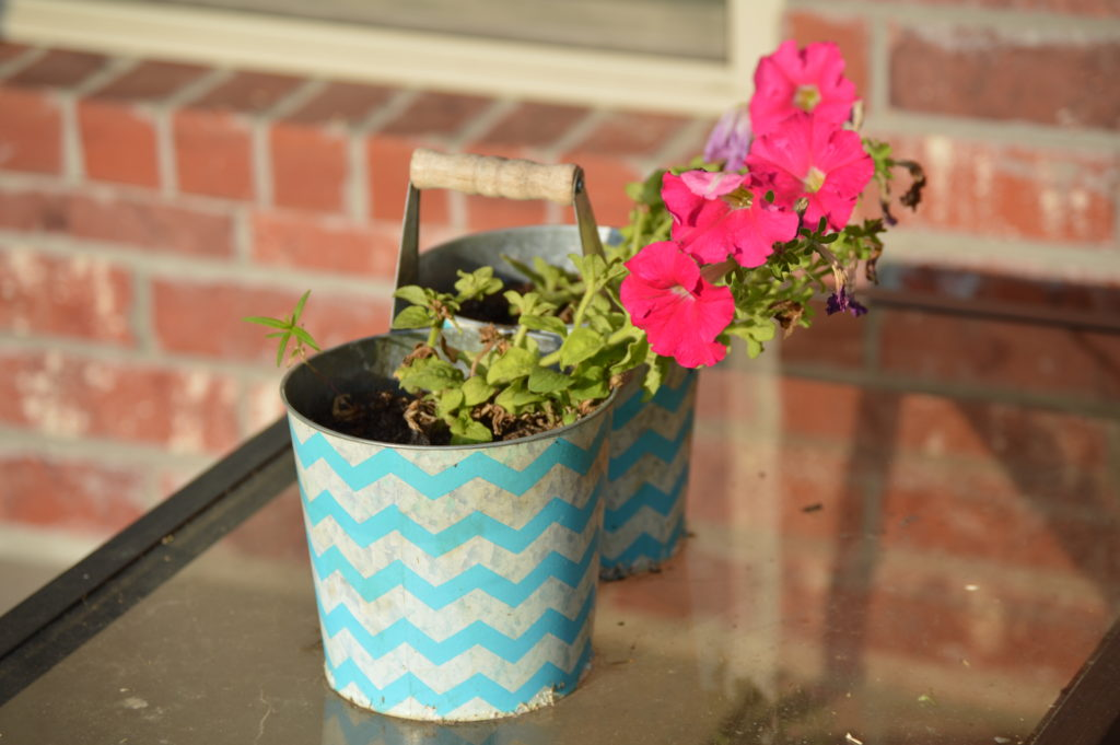 Petunia in Chevron pot | Journey with Jill