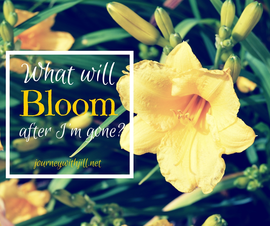 What will Bloom when I'm Gone? | Journey with Jill